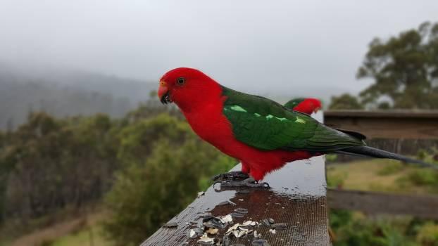 Bird Parrot Macaw Free Photo