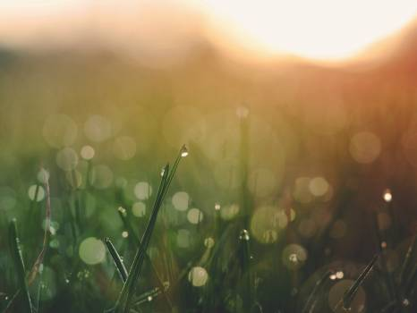 Drop Summer Condensation Free Photo