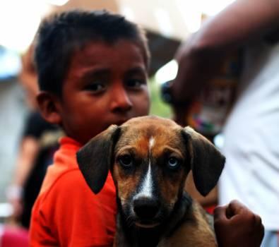 Dog Pet Canine Free Photo