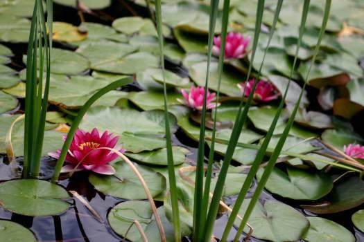 Flower Plant Garden #128961