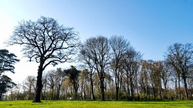 Tree Oak Landscape #129037