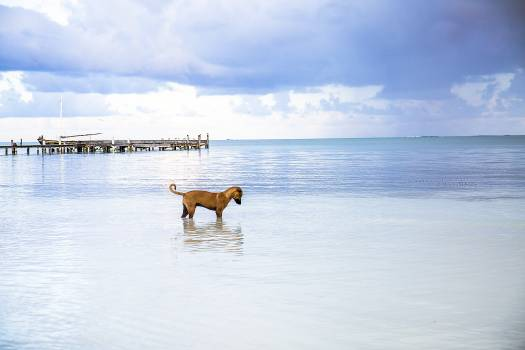 Hunting dog Sporting dog Retriever Free Photo