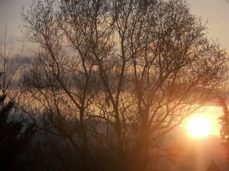Sun Tree Star #129262