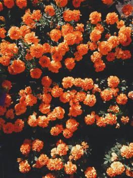 Coral Texture Orange #12949