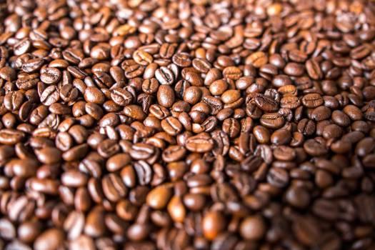 Seed Bean Nut #12957