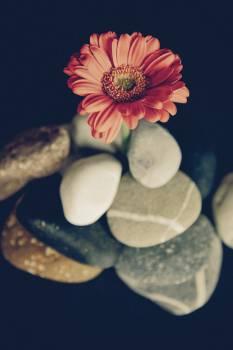 Flower Decoration Flowers #12965
