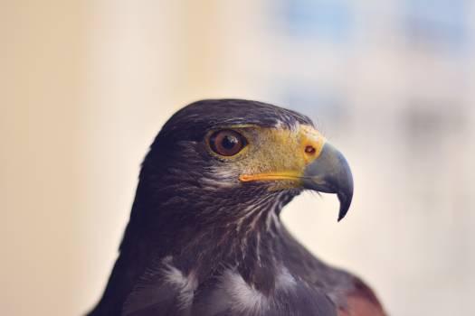 Bird Kite Animal #12993