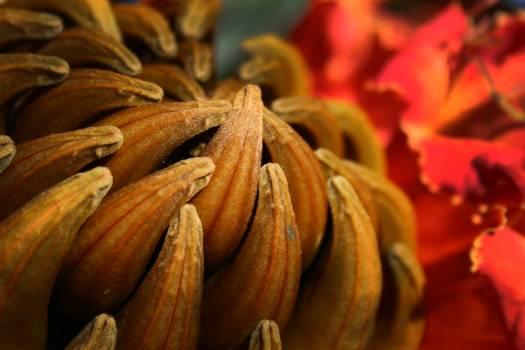 Spice Pumpkin Food Free Photo
