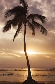 Coconut Palm Beach #130117