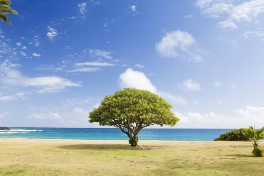 Landscape Sky Tree #130120