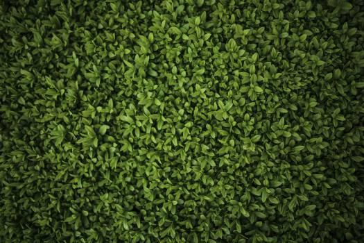 Plant Leaf Grass #13054