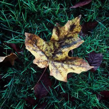 Fungus Organism Tree Free Photo