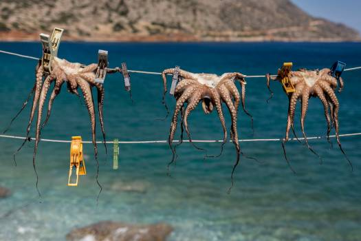 Camel Arabian camel Impala Free Photo
