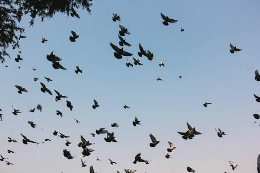 Bird Bat Wading bird Free Photo