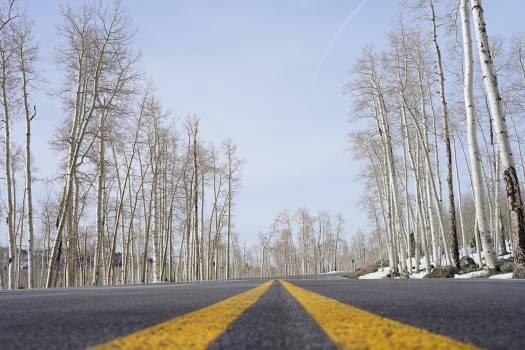 Road Asphalt Avenue Free Photo