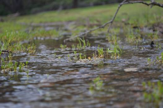 Water snake Forest Water Free Photo