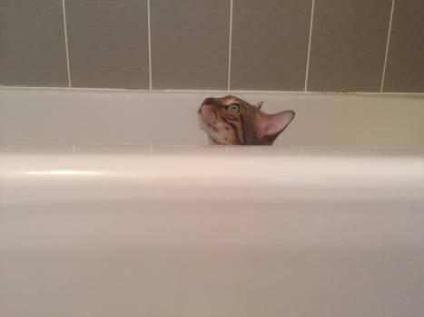 Vessel Bathtub Tub Free Photo