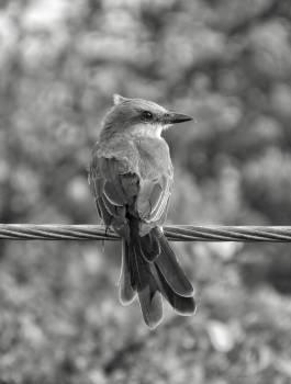 Bird Warbler Wildlife Free Photo