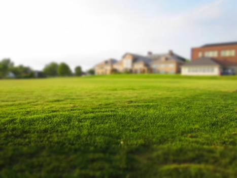 Field Grass Landscape #13220