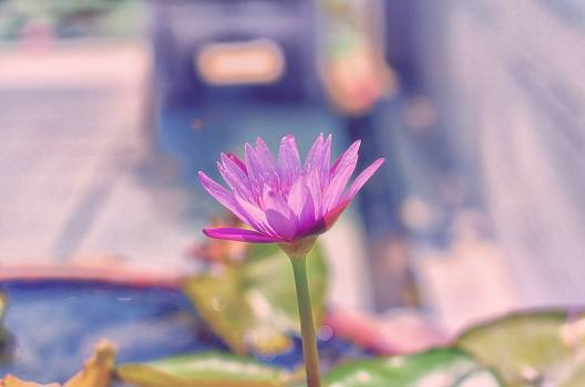 Flower Pink Purple #132892