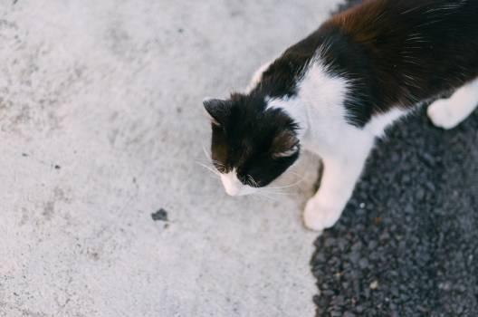 Cat Kitten Feline #133077
