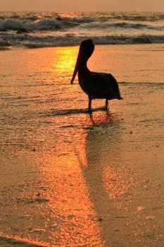 Black stork Stork Wading bird #133113