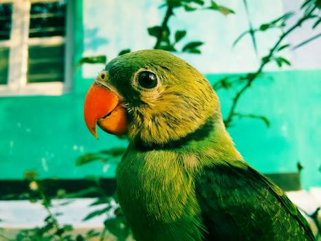 Parrot Bird Beak Free Photo