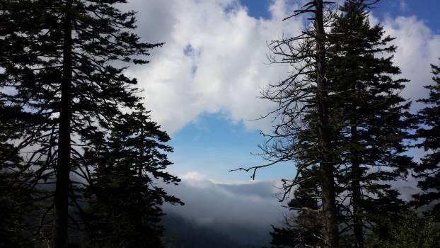 Tree Snag Sky #133284