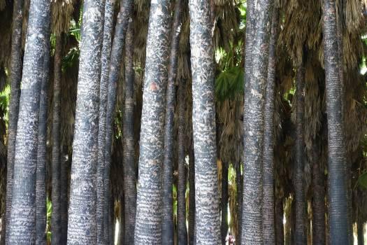 Bamboo Plant Leaf #133378