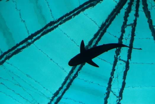 Branch Starfish Animal Free Photo