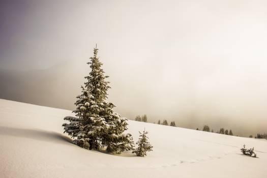 Snow Winter Christmas Free Photo