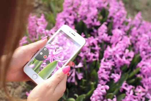 Flower Pink Spring #13398