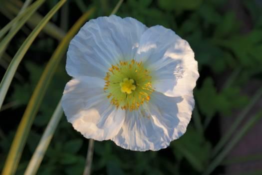 Flower Plant Vine Free Photo