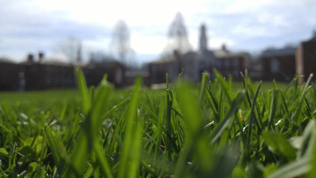 Grass Field Spring Free Photo