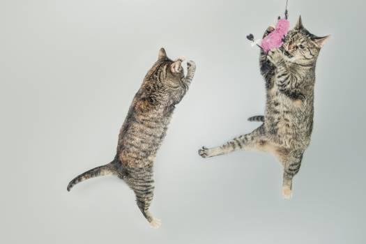 Cat Feline Animal #13471