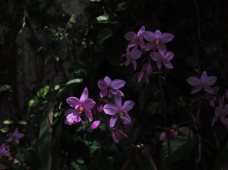 Flower Purple Lilac #134801