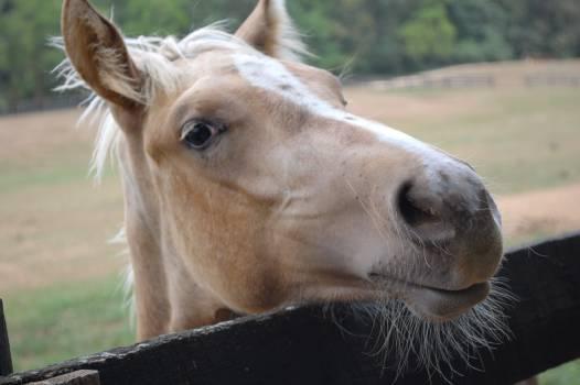 Cattle Animal Ox Free Photo