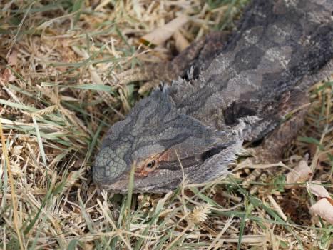 Alligator Crocodile Reptile Free Photo