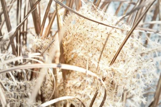 Wheat Cereal Grain #135778