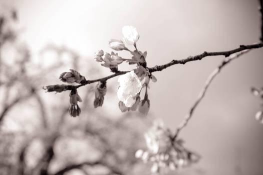 Branchlet Branch Plant Free Photo