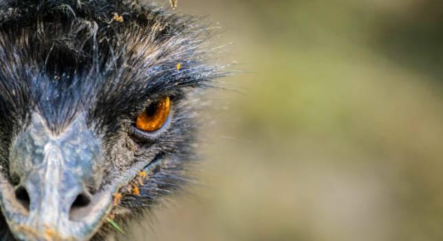 Bird Owl Cat Free Photo