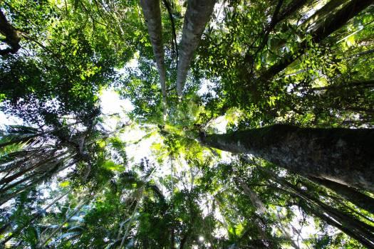 Tree Woody plant Vascular plant #136447