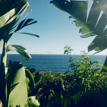 Banana Plant Tropical Free Photo