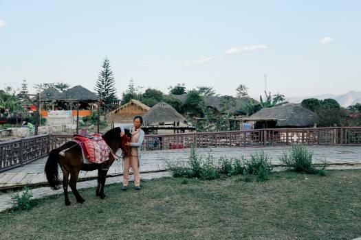 Horse Pen Enclosure Free Photo