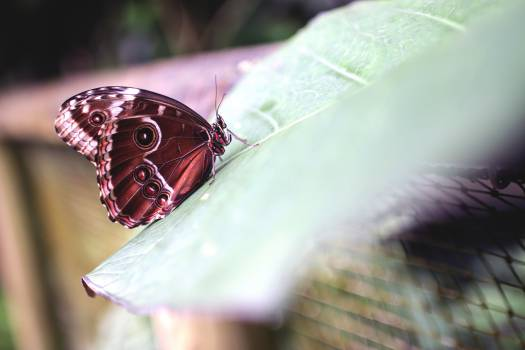 Butterfly Color Flower #13664
