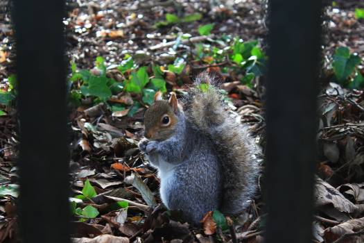 Animal Squirrel Rodent #136732