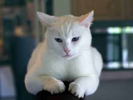 Cat Kitten Feline #13688