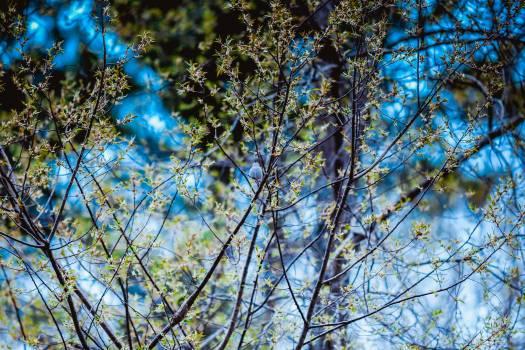 Sky Azure Branchlet Free Photo
