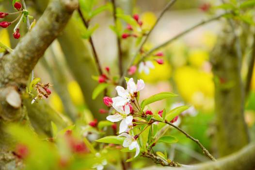 Flower Plant Spring #137260