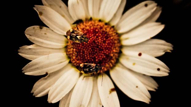 Daisy Flower Sunflower #13772